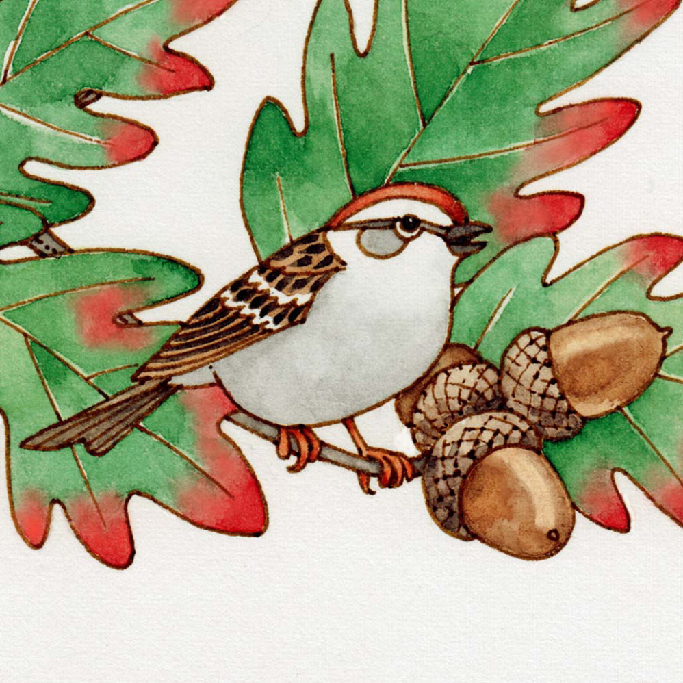Sparrow and oak