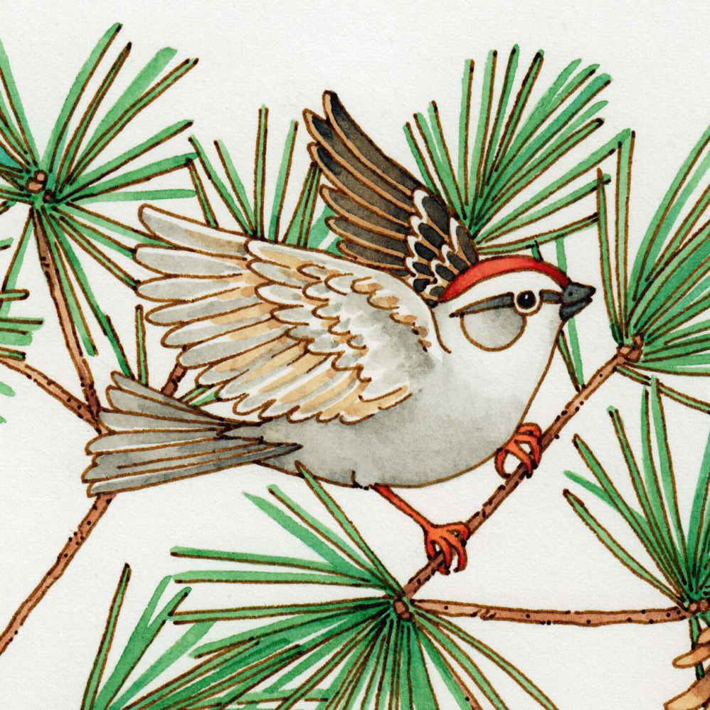 Sparrow and pine