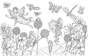 Fairy & Insects