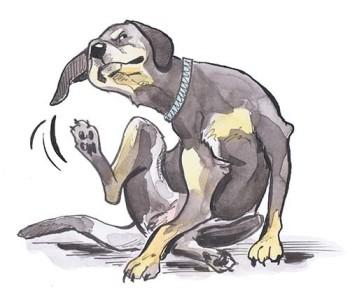 Scratchy Dog 1