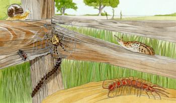 © Ladybird - First Fabulous Facts : Minibeasts