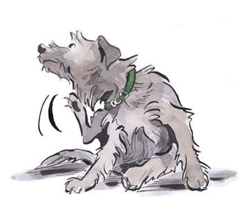 Scratchy Dog 2