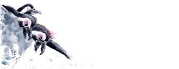 Penguin Flight Oops!