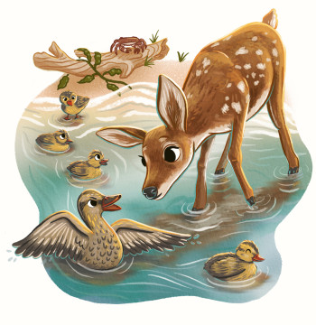 Deer following duck family