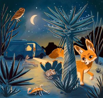 Desert animals night camping scene