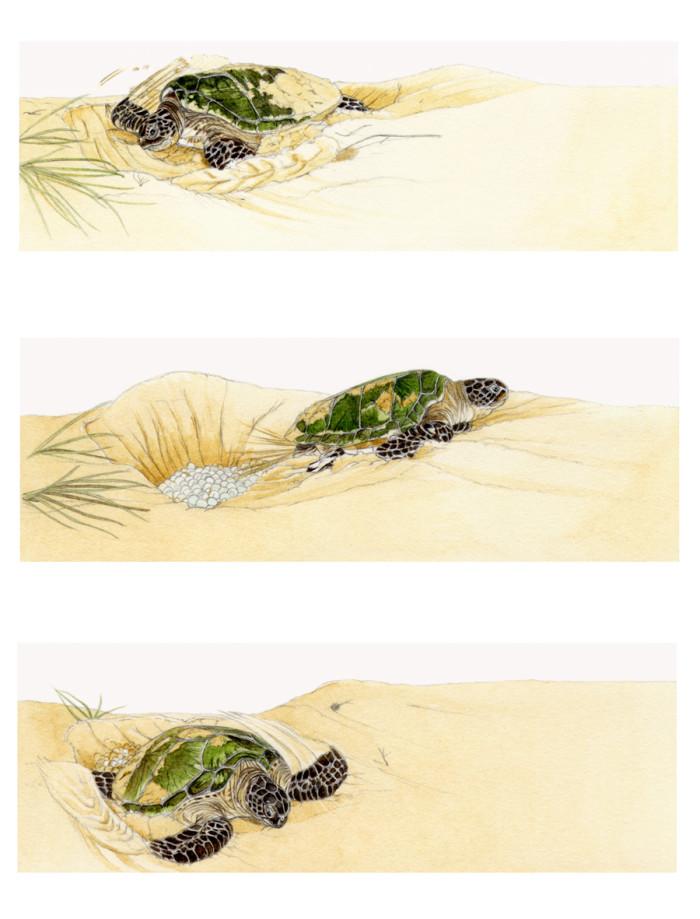 Seashore - Beginners - © Usborne Children's Books