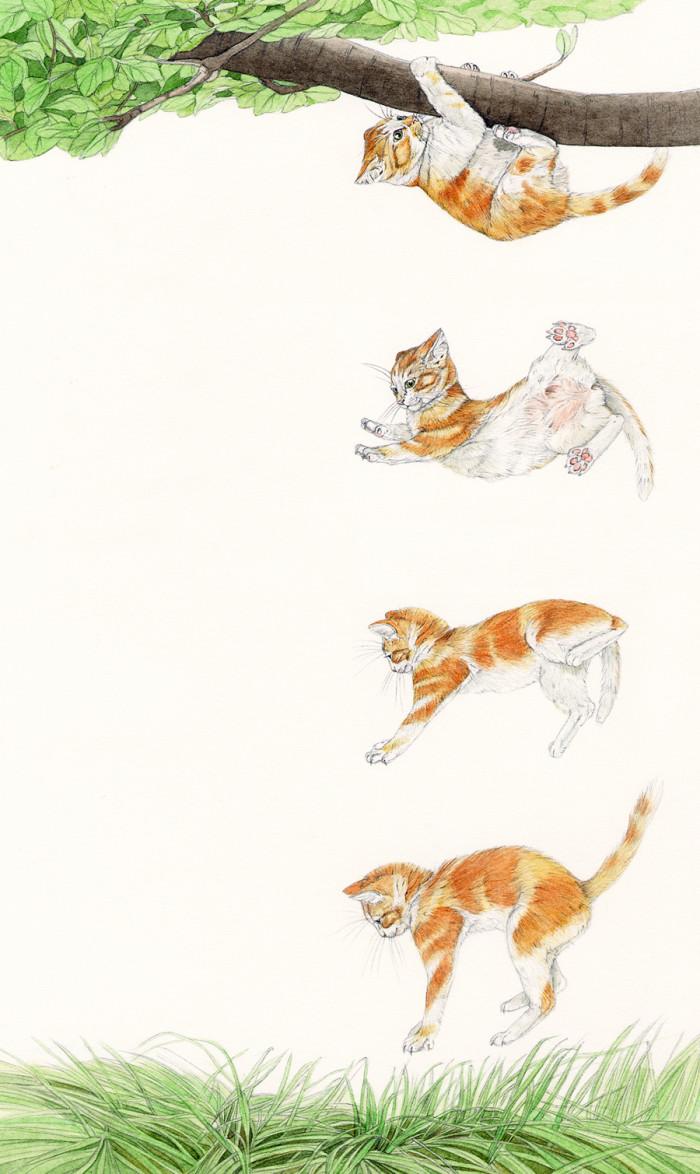 Cats - Beginners - © Usborne Children's Books