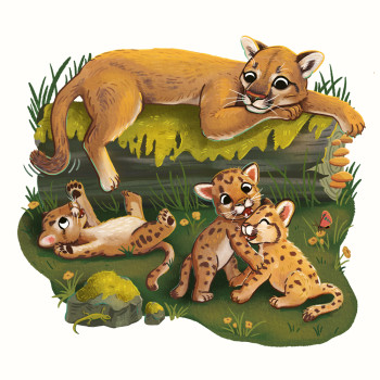 Mountain Lion Cubs and Mom