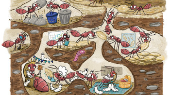 Ants feature in Ask Magazine April 2021 Issue
