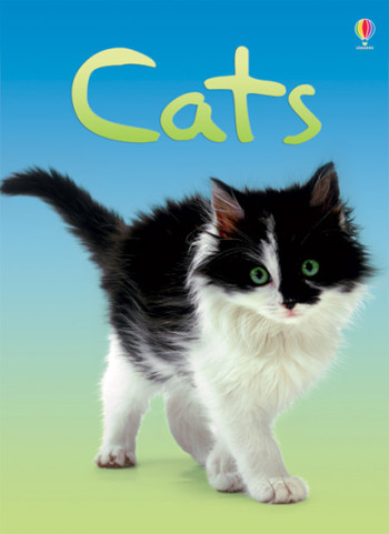 Cats - Beginners