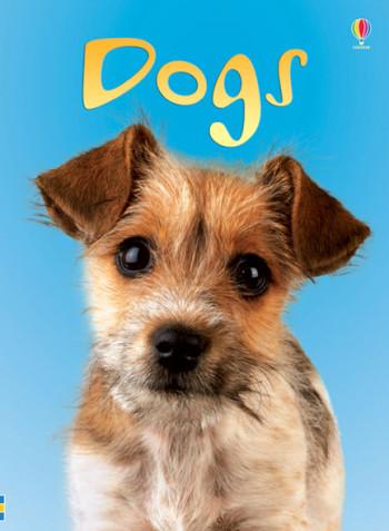 Dogs - Beginners