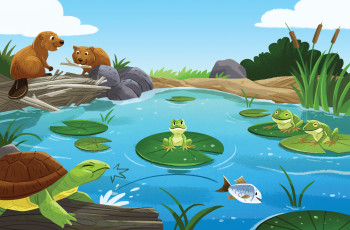 A Little Frog in a Big Pond